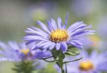 Macro - bloemen