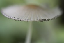Macro - paddenstoel